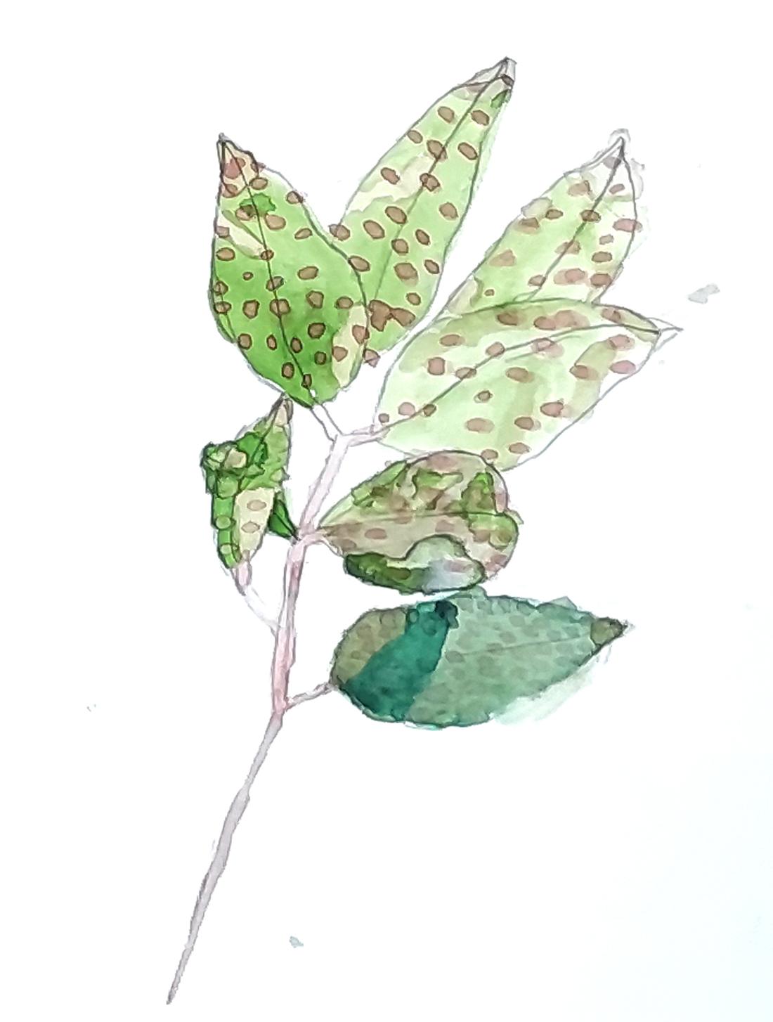 las plantas del jardin de gençana. exposicion alumnos 5º educacion primaria