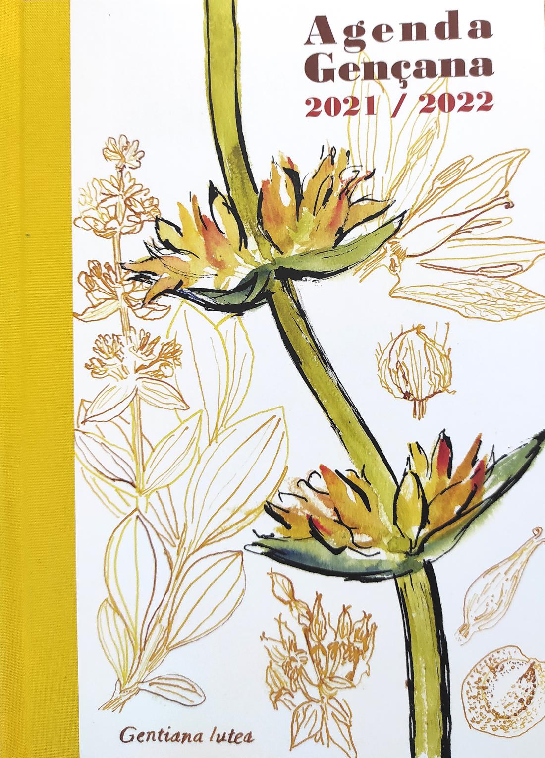 ilustración de leticia ruifernandez, genciana, planta